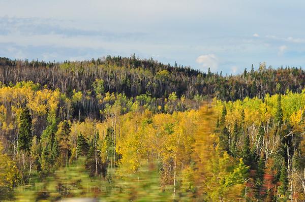 Autumn, Boreal Forest