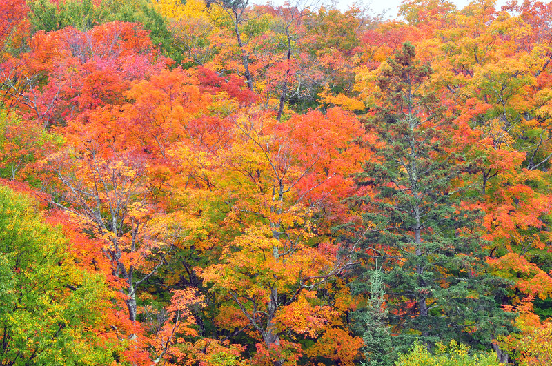 Fall Colors Autumn Leaves Autumn Leaves