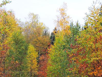 Autumn Trees & Leaves