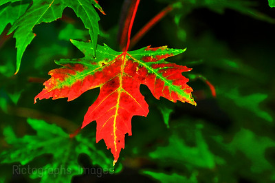 Leaf Turning Colour