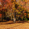 Misc_Fall2010_036