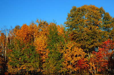 Beautiful, Fall, Autumn, Leaves with Trees