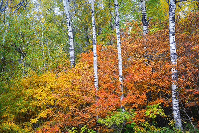 Trees In The Autumn Forest
