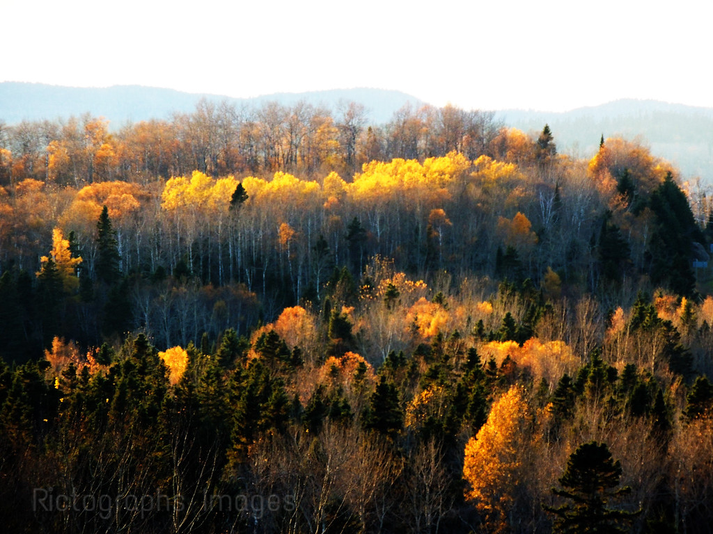 The Boreal Forest Trees, Autumn 2016, Ric Evoy, Rictographs Images