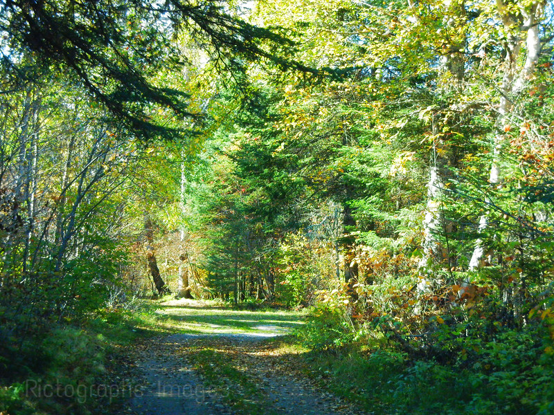 Autumn Road, Trees, forest,
