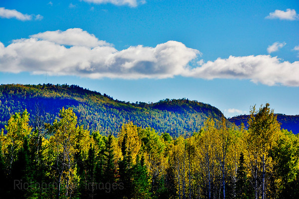 Boreal Forest Trees