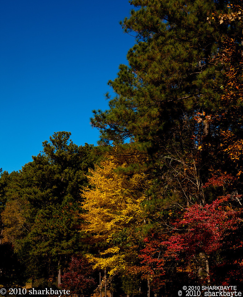 Color amongst the pines