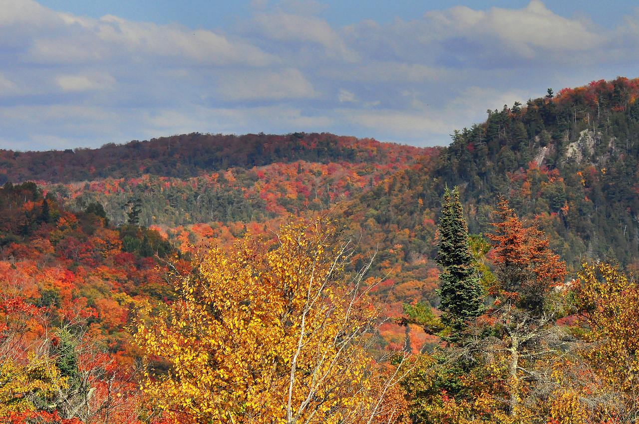 North of Lake Superior Autumn Leaves Autumn Leaves
