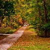 Fall at White Clay Creek