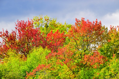 Autumn Leaves, Red & Green