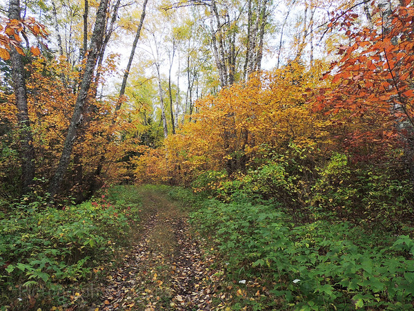 The Casque Isles Hiking Trail,   Autumn Path