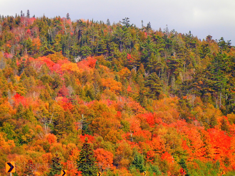 Along Trans Canada Highway Autumn Leaves Autumn Leaves