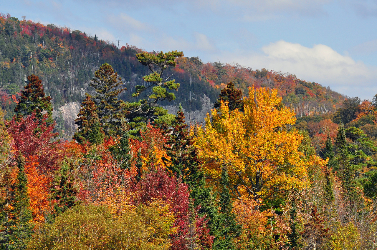Fall Forest Northwest of Sault Ste. Marie, Ontario, Canada Autumn Leaves Autumn Leaves