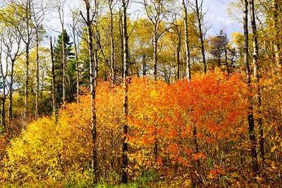 #2018 Fall Trees