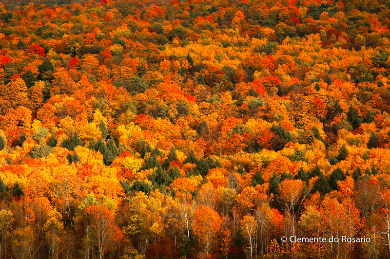 Colorful Treetops in autumn, Vermont, USA