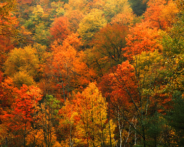 Fall Foilage along the scenic Mohawk Trail in Massachusetts,USA