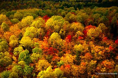 Fall colour in Algonquin Provincial Park, Ontario, Canada