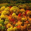 Fall colour in Algonquin Provincial Park, Ontario, Canada