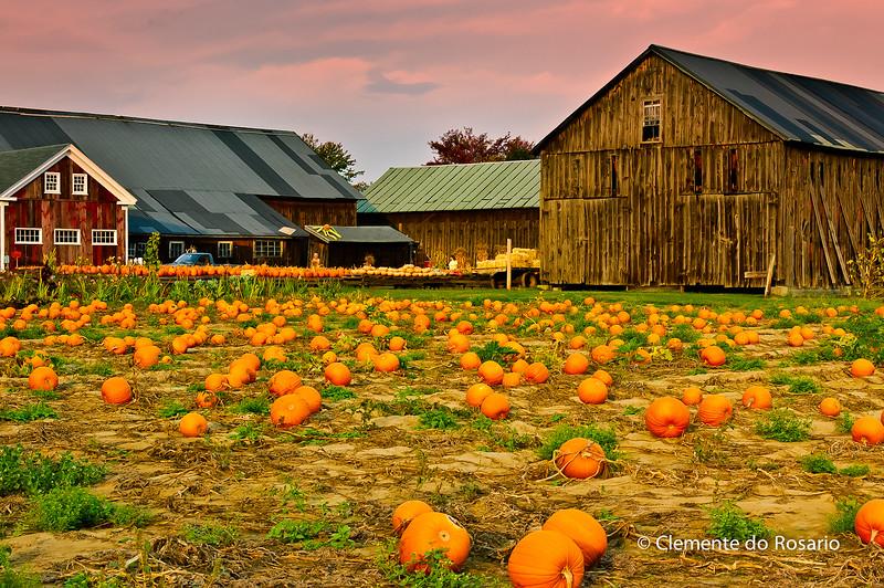 Pumpkin Farm near Amherst, Massachusetts, October 2007
