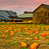 Pumpkin Farm near Amherst, Massachusetts, October 2007
