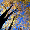 Autumn Leaves and Blue Sky