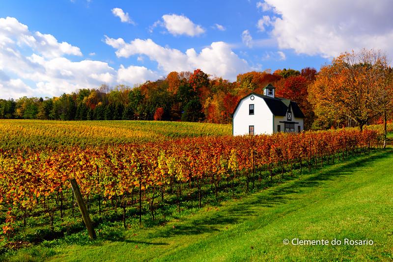 Autumn in the Niagara Wine Region, Niagara,Ontario, Canada