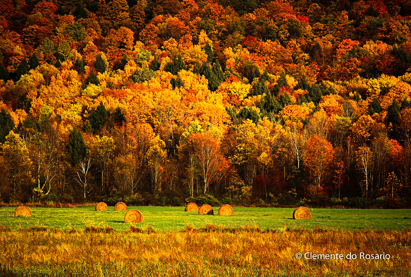 Vibrant Fall Colour in Vermont, USA