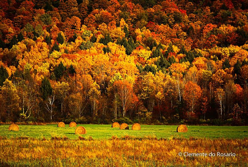 Vibrant Fall Colour in Vermont, USA