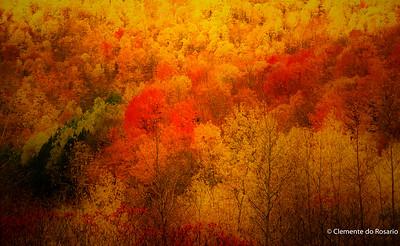 Painterly Fall colors along Mohawk Trail in Massachusetts USA