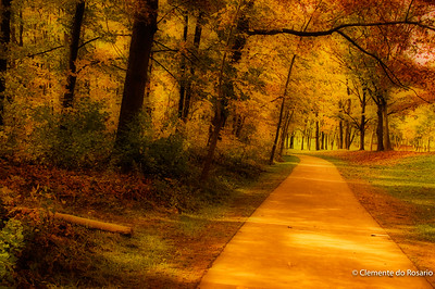 Fall scene in the Niagara Region