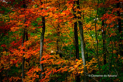 Vibrant Fall colours in Oakville, Ontario, Canada