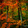 Vibrant Fall colours in Oakville, Ontario, Canada