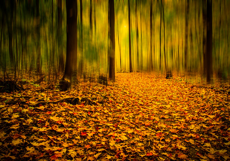Fall in a wooded area in Oakville, Ontario,Canada