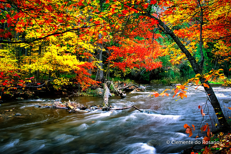 Forks of the Credit River, Caledon, Ontario,Canada