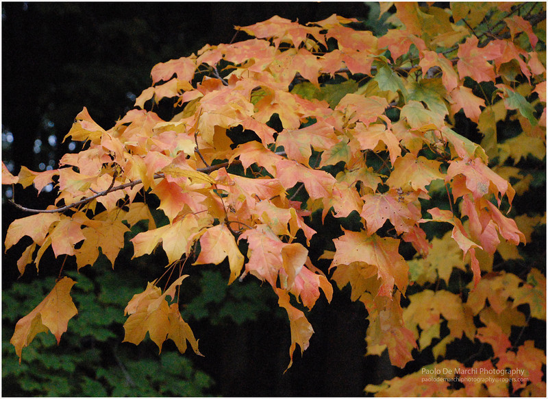 Fall Colours Toronto
