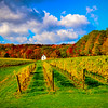 Fall colours - Hidden Bench Vineyards, Niagara Region,Ontario