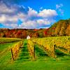 Fall colours - Hidden Bench Vineyards, Niagara Region,Ontario