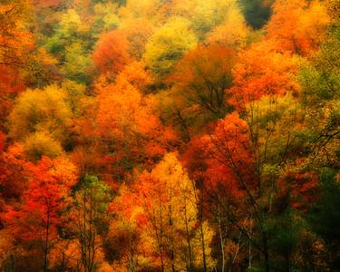 Mohawk Ridge Fall