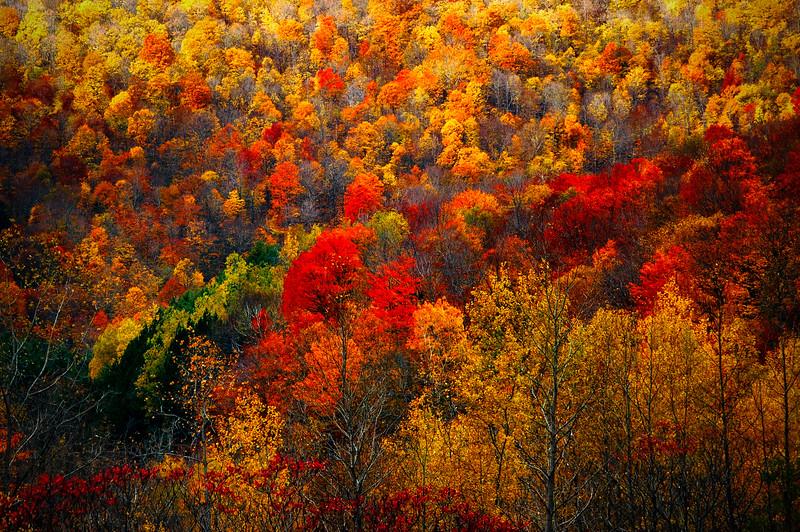 Fall in Mohawk Trail, Massachusetts, USA