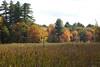 Meadow and wetlands, Westford