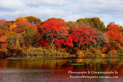 Fall Foliage edited ;)