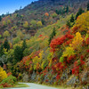 Fall Foliage along the Blue Ridge Parkway in NC