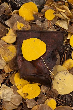 Eastern Sierra Fall Foliage
