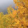 Fall Foliage on Ira Mountain, Kingfield, Maine