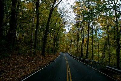 Fall Leaves 2007