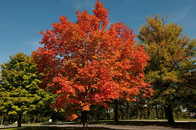 Fall Leaves 2009