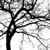 Investigating Trees