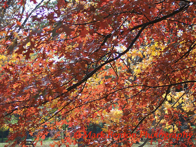 The Many Colors of Fall