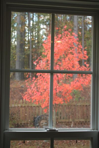 Fall Trees 2010 11 14