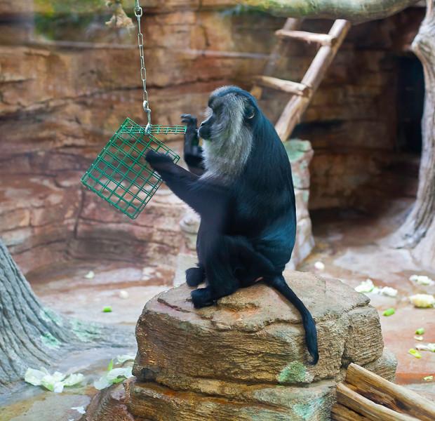 St. Louis Zoo - Fall Days